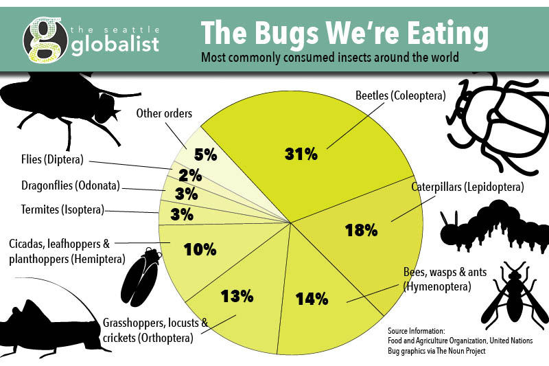 Bugs-Infographic