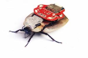 Robo Roach