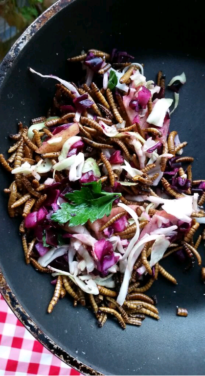 Edible insects salad
