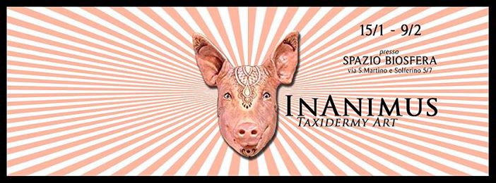 Inanimus-pig