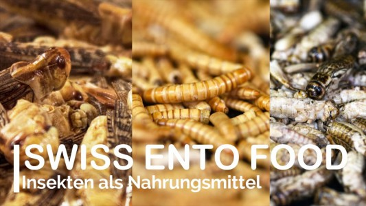 swiss ento food 2017